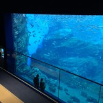仙台の水族館、料金、チケットの割引は?ネット購入で◯◯回避?