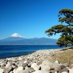 伊豆 河津桜 温泉や観光 是非立ち寄りたいおすすめスポットは?