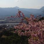 松田の桜まつりの駐車場と渋滞は?画像あり