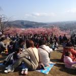 松田町の桜まつり、お食事処は?ランチ、出店情報、画像あり