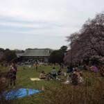小金井公園の桜、今日の開花状況はこんな感じでした
