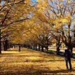 昭和記念公園の紅葉、行ってきた!今はここが見頃~!